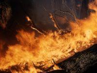2017, un año nefasto de incendios forestales en España
