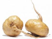 Maca andina, una planta que causa sensación