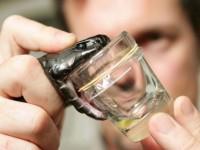Las serpientes son cada vez más venenosas