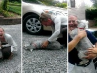 Un perro se desmaya tras reencontrarse con su dueña 2 años  después