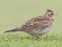 Europa pierde 421 millones de aves en los últimos 30 años