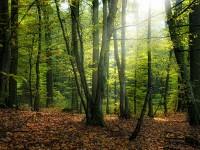 La vegetación en Europa absorbe más CO2 de lo que se creía
