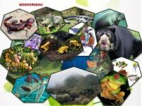 Aprende sobre biodiversidad