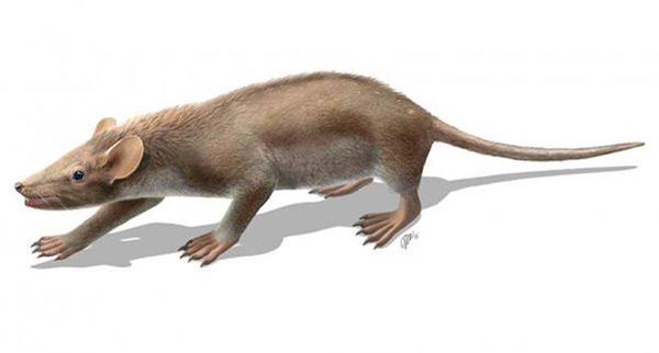 El animal con pelo más antiguo del mundo es de Cuenca