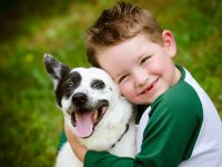 ¿Qué criterios debemos seguir para elegir el pienso de nuestra mascota?