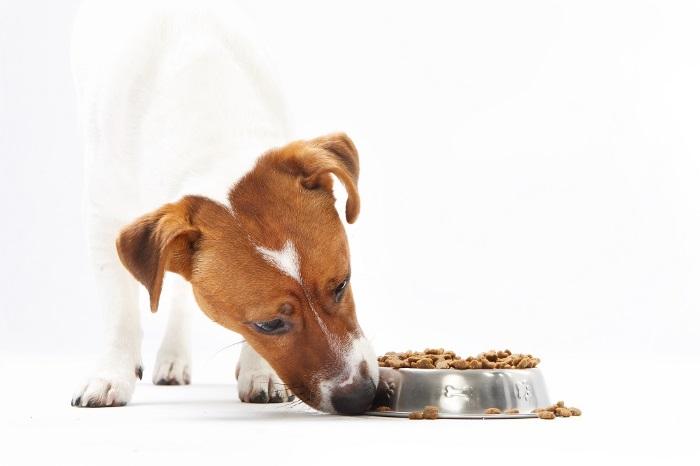 La clínica Caramuel y la buena alimentación de tu mascota