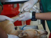Opiniones sobre los cursos de Campus Training relacionados con veterinaria y animales